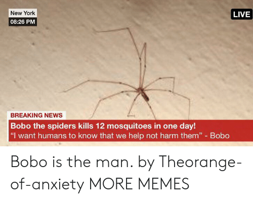 """Dank, Memes, and New York: New York  LIVE  08:26 PM  BREAKING NEWS  Bobo the spiders kills 12 mosquitoes in one day!  """"I want humans to know that we help not harm them"""" Bobo Bobo is the man. by Theorange-of-anxiety MORE MEMES"""