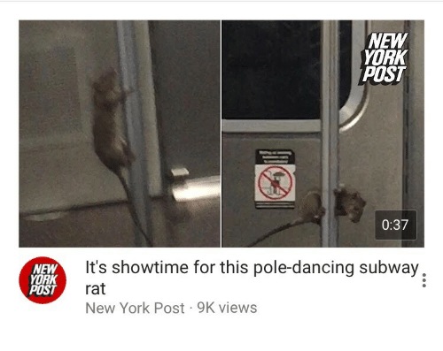 Showtime: NEW  YORK  POST  0:37  NEW  YORK  POST  It's showtime for this pole-dancing subway,  rat  New York Post 9K views