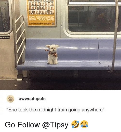 """Lean, Memes, and New York: NEW YORKERS KEEP  NEW YORK SAFE  t lean on door  awwcutepets  """"She took the midnight train going anywhere"""" Go Follow @Tipsy 🤣😂"""