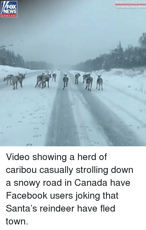 Facebook, Memes, and News: Newfoundland, Canada  FOX  NEWS  channel Video showing a herd of caribou casually strolling down a snowy road in Canada have Facebook users joking that Santa's reindeer have fled town.