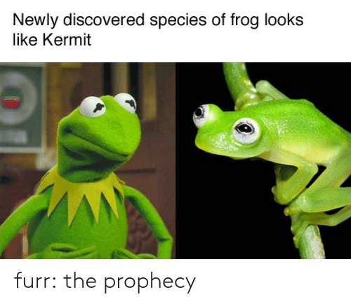 The Prophecy: Newly discovered species of frog looks  like Kermit furr: the prophecy