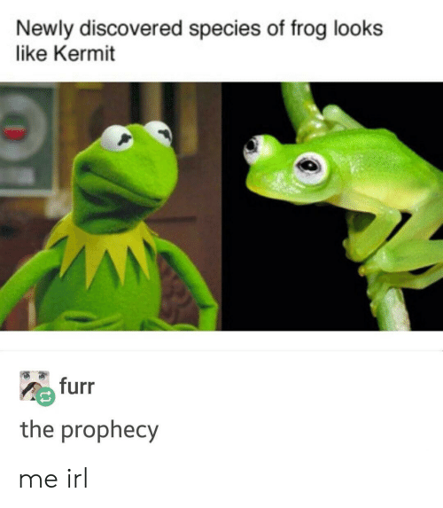 The Prophecy: Newly discovered species of frog looks  like Kermit  furr  the prophecy me irl
