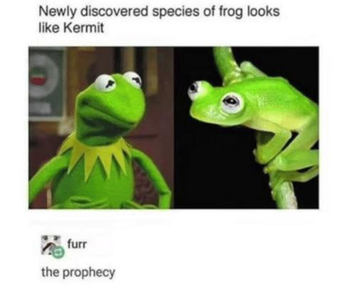 The Prophecy: Newly discovered species of frog looks  like Kermit  furr  the prophecy