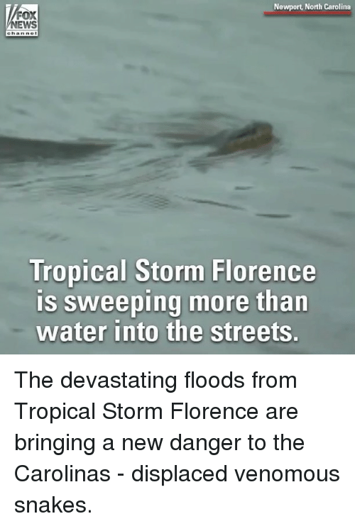 Memes, Newport, and News: Newport, North Carolina  NEWS  Tropical Storm Florence  is sweeping more than  water into the streets. The devastating floods from Tropical Storm Florence are bringing a new danger to the Carolinas - displaced venomous snakes.