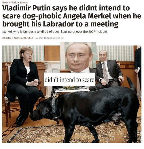 Vladimir Putin: News> World> Europe  Vladimir Putin says he didnt intend to  scare dog-phobic Angela Merkel when he  brought his Labrador to a meeting  Merkel, who is famously terrified of dogs, kept quiet over the 2007 incident  John Hall | @johnmatthewhall | Monday 11 January 2016 | โ.]  didn't intend to scare