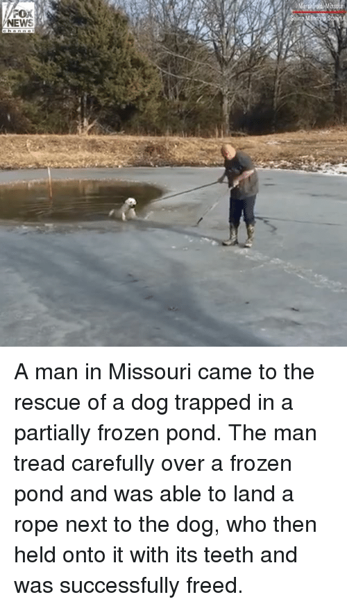 Frozen, Memes, and News: NEWS A man in Missouri came to the rescue of a dog trapped in a partially frozen pond. The man tread carefully over a frozen pond and was able to land a rope next to the dog, who then held onto it with its teeth and was successfully freed.