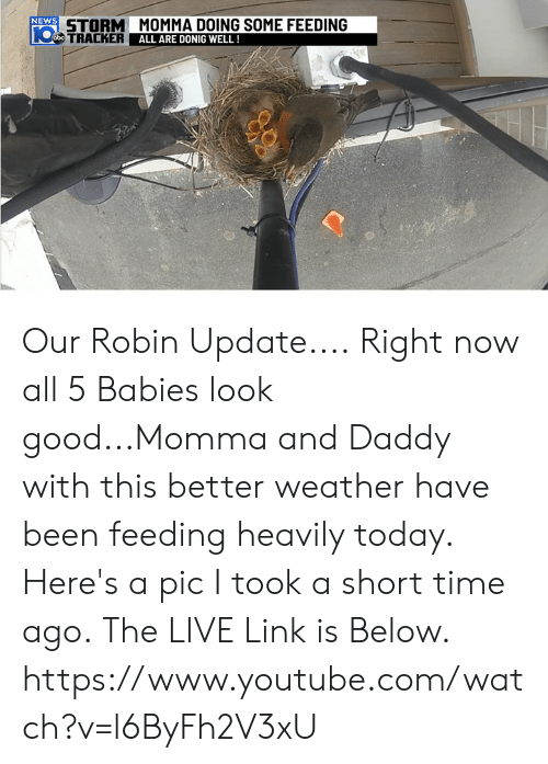 Memes, News, and youtube.com: NEWS  STORM MOMMA DOING SOME FEEDING  TRACKER  de  U A N  ALL ARE DONIG WELL ! Our Robin Update.... Right now all 5 Babies look good...Momma and Daddy with this better weather have been feeding heavily today. Here's a pic I took a short time ago.  The LIVE Link is Below. https://www.youtube.com/watch?v=l6ByFh2V3xU