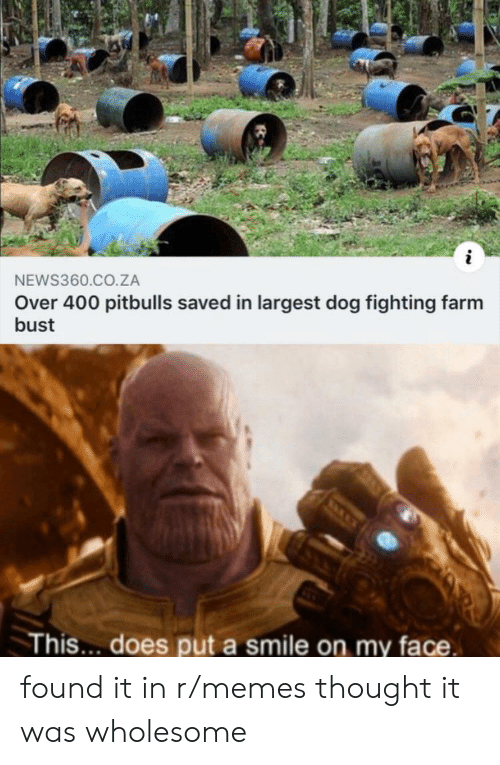 Memes, Smile, and Wholesome: NEWS360.CO.ZA  Over 400 pitbulls saved in largest dog fighting farm  bust  This... does put a smile on my face found it in r/memes thought it was wholesome