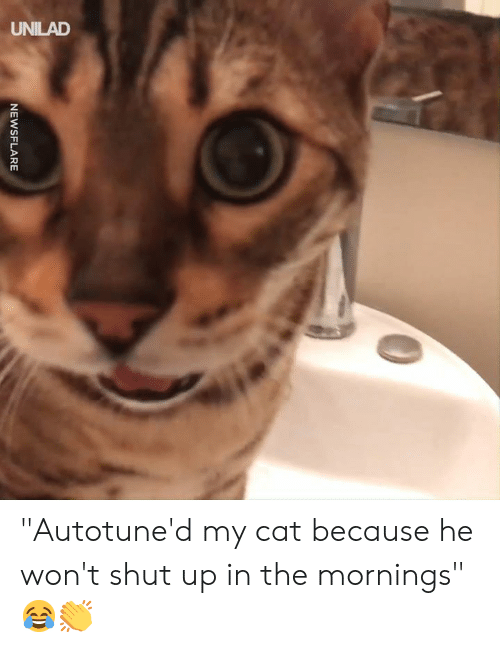"""Mornings: NEWSFLARE """"Autotune'd my cat because he won't shut up in the mornings"""" 😂👏"""