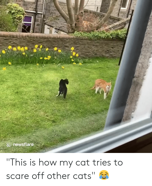 """Cats, Scare, and How: newsflare """"This is how my cat tries to scare off other cats"""" 😂"""