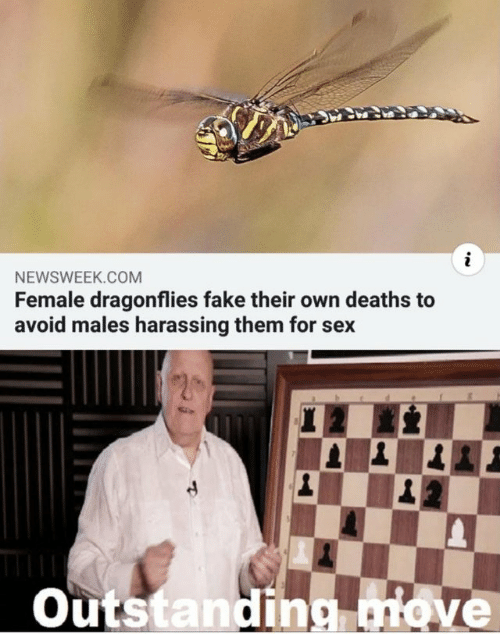 Fake, Sex, and Deaths: NEWSWEEK.COM  Female dragonflies fake their own deaths to  avoid males harassing them for sex  Outstanding nove