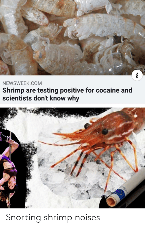 scientists: NEWSWEEK.COM  Shrimp are testing positive for cocaine and  scientists don't know why Snorting shrimp noises