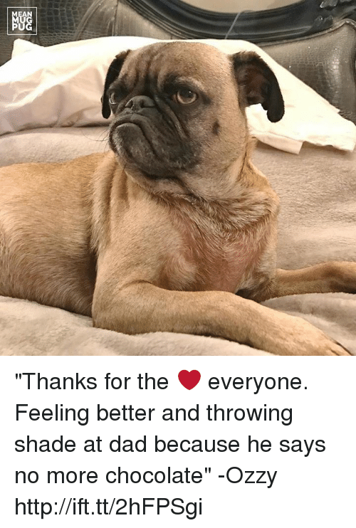 "Ozzies: NGG ""Thanks for the ❤ everyone. Feeling better and throwing shade at dad because he says no more chocolate"" -Ozzy http://ift.tt/2hFPSgi"