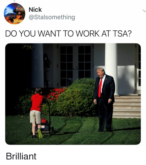Funny, Work, and Nick: Nick  @Stalsomething  DO YOU WANT TO WORK AT TSA? Brilliant