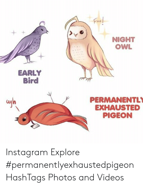 Night Owl Early Bird Permanently Exhausted Pigeon La Instagram
