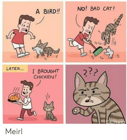 Bad, Chicken, and MeIRL: No! BAD CAT!  A BIRD!!  LATER...  2??  I BROU6HT  CHICKEN!  SEPHKO Meirl