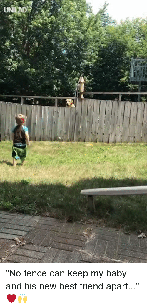 """Best Friend, Dank, and Best: """"No fence can keep my baby and his new best friend apart..."""" ❤️🙌"""