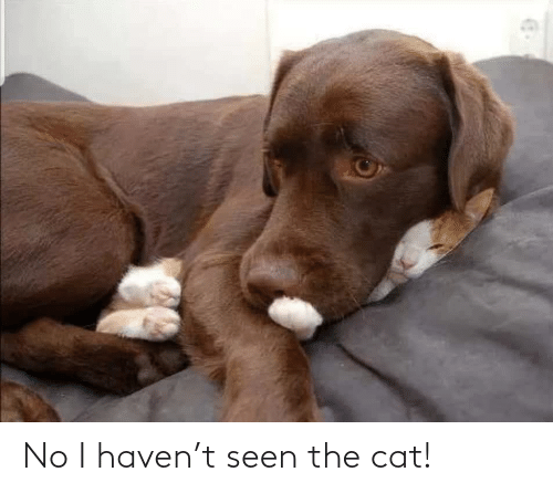 haven: No I haven't seen the cat!