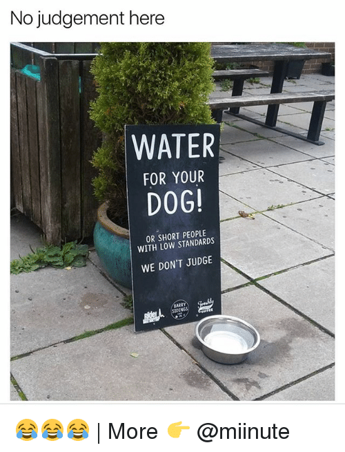 Judgementality: No judgement here  WATER  FOR YOUR  DOG!  OR SHORT PEOPLE  WITH LOW STANDARDS  WE DON'T JUDGE 😂😂😂 | More 👉 @miinute