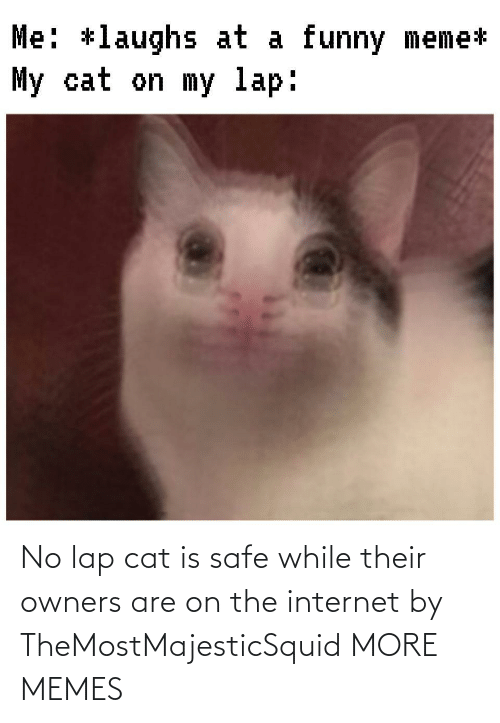 safe: No lap cat is safe while their owners are on the internet by TheMostMajesticSquid MORE MEMES