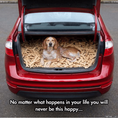 Happy Memes: No matter what happens in your life you will  never be this happy.  memes com