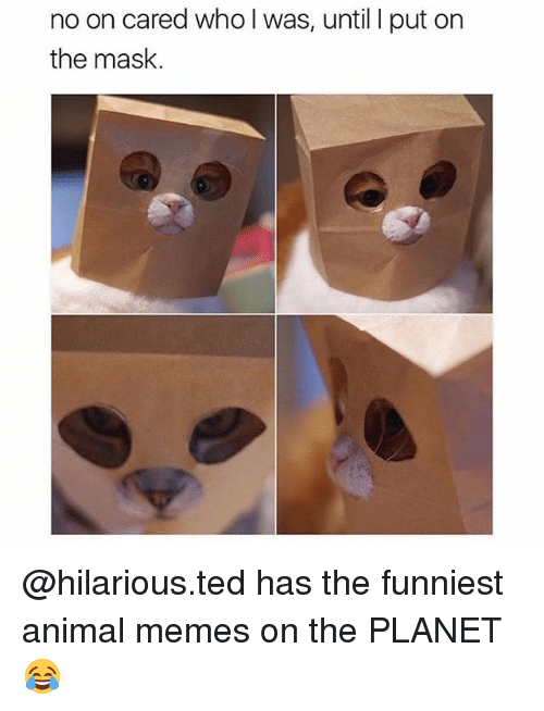 Funniest Animal: no on cared who l was, until I put on  the mask. @hilarious.ted has the funniest animal memes on the PLANET 😂