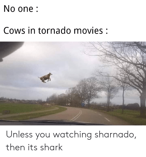 Movies, Shark, and Tornado: No one:  Cows in tornado movies: Unless you watching sharnado, then its shark
