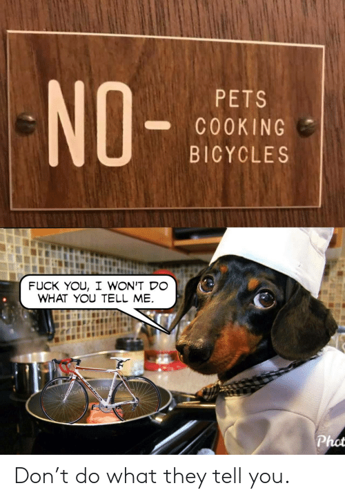Fuck You, Pets, and Fuck: NO-  PETS  C0OKING  BICYCLES  FUCK YOU, I WON'T DO  WHAT YOU TELL ME  chsd.c  Cfebrit  Phot Don't do what they tell you.