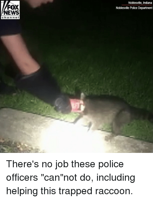 """Memes, News, and Police: Noblesville, Indiana  Noblesville Police Department  FOX  NEWS  chan nel There's no job these police officers """"can""""not do, including helping this trapped raccoon."""