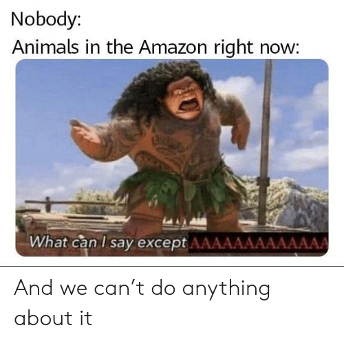 Amazon, Animals, and Can: Nobody:  Animals in the Amazon right now:  What can I say except AAAAAAAAAAAAA And we can't do anything about it