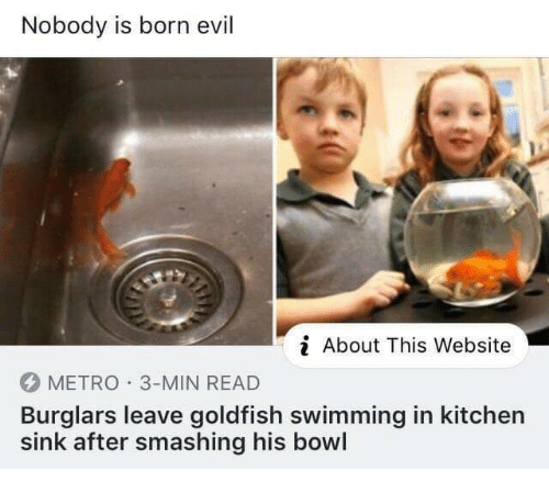 smashing: Nobody is born evil  About This Website  METRO 3-MIN READ  Burglars leave goldfish swimming in kitchen  sink after smashing his bowl