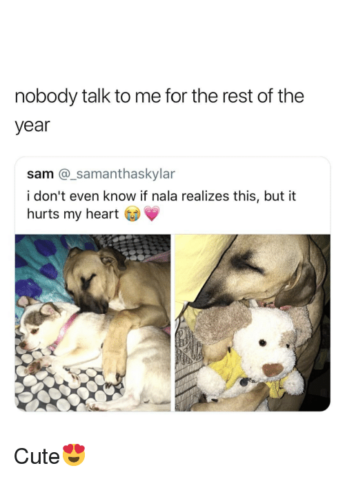 Cute, Heart, and Girl Memes: nobody talk to me for the rest of the  year  sam @_samanthaskylar  i don't even know if nala realizes this, but it  hurts my heart Cute😍