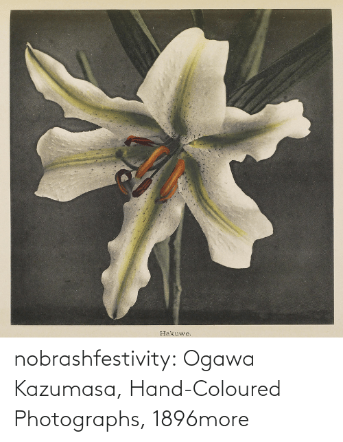 Tagged: nobrashfestivity:  Ogawa Kazumasa, Hand-Coloured Photographs, 1896more
