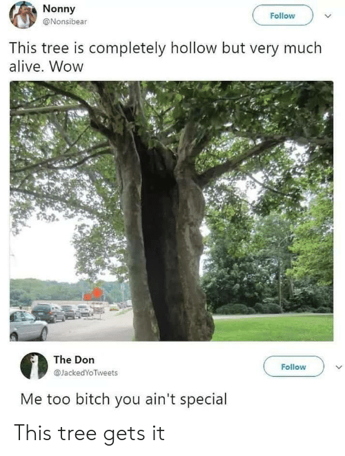 Alive, Wow, and Tree: Nonny  Follow  @Nonsibear  This tree is completely hollow but very much  alive. Wow  The Don  Follow  @JackedYoTweets  Me too bitch you ain't special This tree gets it