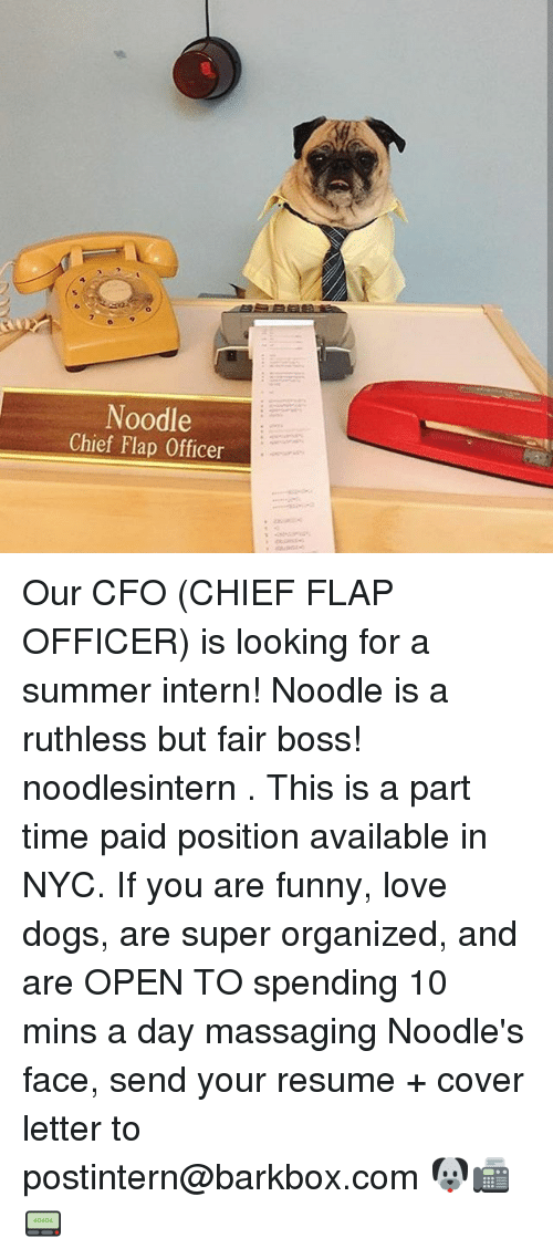 internations: Noodle  Chief Flap Officer Our CFO (CHIEF FLAP OFFICER) is looking for a summer intern! Noodle is a ruthless but fair boss! noodlesintern . This is a part time paid position available in NYC. If you are funny, love dogs, are super organized, and are OPEN TO spending 10 mins a day massaging Noodle's face, send your resume + cover letter to postintern@barkbox.com 🐶📠📟