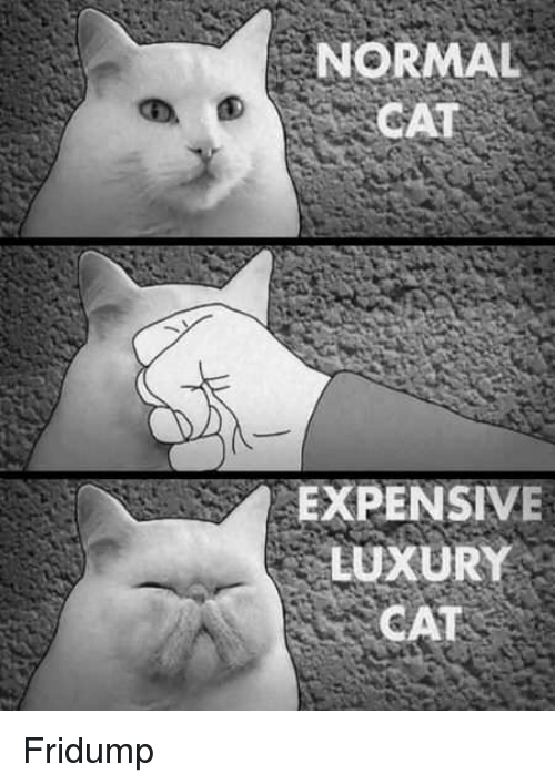 Cat, Normal, and  Expensive: NORMAL  CAT  EXPENSIVE  LUXURY  CAT Fridump