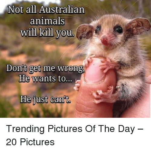 Animals, Pictures, and Australian: Not all Australian  animals  will kill vou  Don't get me wrong  He wants to.  He iust can't Trending Pictures Of The Day – 20 Pictures