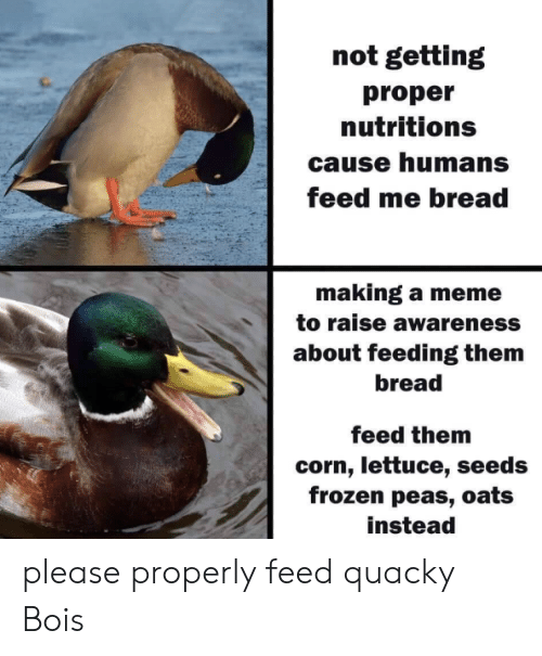 seeds: not getting  proper  nutritions  cause humans  feed me bread  making a meme  to raise awareness  about feeding them  bread  feed them  corn, lettuce, seeds  frozen peas, oats  instead please properly feed quacky Bois