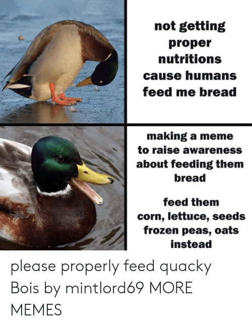 seeds: not getting  proper  nutritions  cause humans  feed me bread  making a meme  to raise awareness  about feeding them  bread  feed them  corn, lettuce, seeds  frozen peas, oats  instead please properly feed quacky Bois by mintlord69 MORE MEMES
