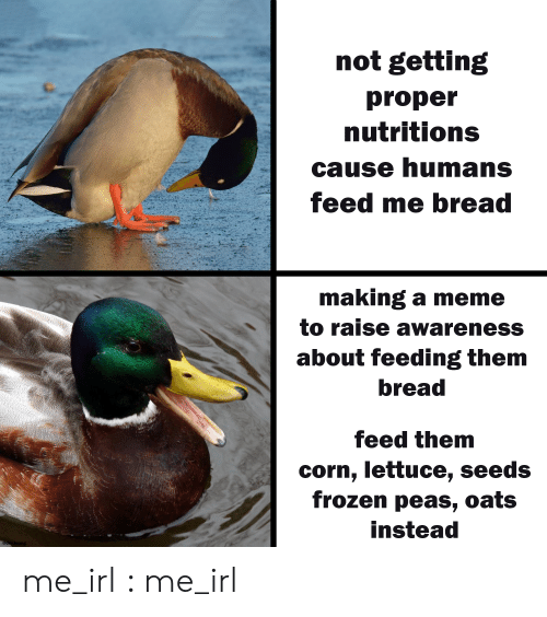 Der: not getting  proper  nutritions  cause humans  feed me bread  making a meme  to raise awareness  about feeding them  bread  feed them  corn, lettuce, seeds  frozen peas, oats  instead  @der.leong me_irl : me_irl