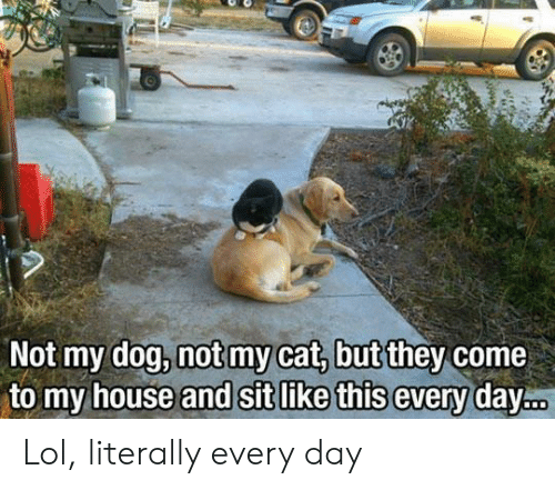Lol, My House, and House: Not my dog, notmy cat, butithey come  to my house and Sit like t Lol, literally every day