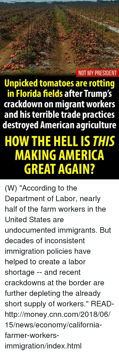 """Making America Great Again: NOT MY PRESIDENT  Unpicked tomatoes are rotting  in Florida fields after Trump's  crackdown on migrant workers  and his terrible trade practices  destroyed American agriculture  HOW THE HELL IS THIS  MAKING AMERICA  GREAT AGAIN? (W) """"According to the Department of Labor, nearly half of the farm workers in the United States are undocumented immigrants. But decades of inconsistent immigration policies have helped to create a labor shortage -- and recent crackdowns at the border are further depleting the already short supply of workers.""""  READ-  http://money.cnn.com/2018/06/15/news/economy/california-farmer-workers-immigration/index.html"""
