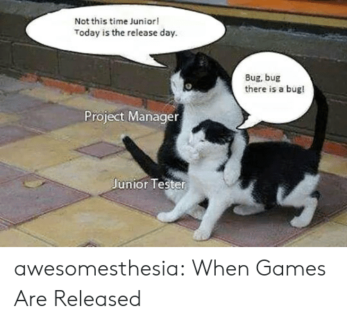 project manager: Not this time Junior!  Today is the release day  Bug, bug  there is a bug!  Project Manager  Junior Tester awesomesthesia:  When Games Are Released
