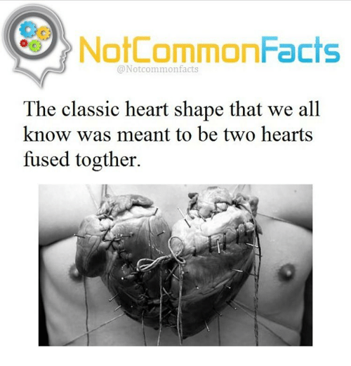 heart shape: NotCommonFacts  @Notcommon facts  The classic heart shape that we all  know was meant to be two hearts  fused togther.