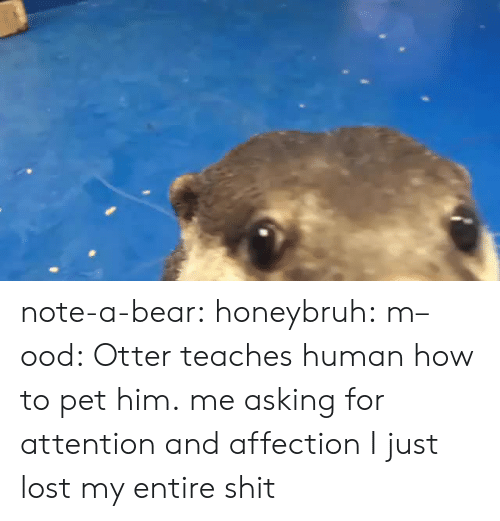 otter: note-a-bear:  honeybruh:   m–ood: Otter teaches human how to pet him.  me asking for attention and affection   I just lost my entire shit
