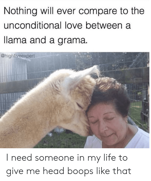 Head, Life, and Love: Nothing will ever compare to the  unconditional love between a  lama and a grama  @highfiveexpert I need someone in my life to give me head boops like that