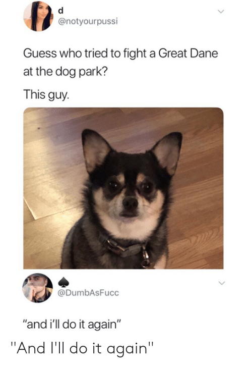 """Dane: @notyourpussi  Guess who tried to fight a Great Dane  at the dog park?  This guy  @DumbAsFucc  """"and i'll do it again"""" """"And I'll do it again"""""""
