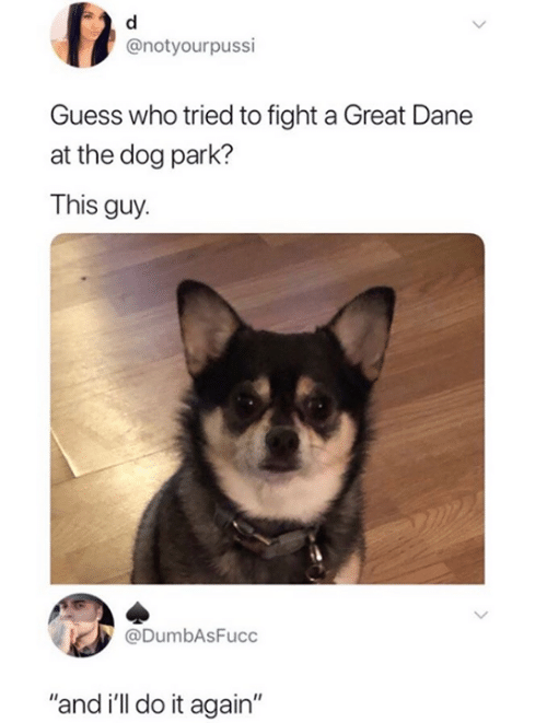 """Dane: @notyourpussi  Guess who tried to fight a Great Dane  at the dog park?  This guy.  @DumbAsFucc  """"and i'll do it again"""""""