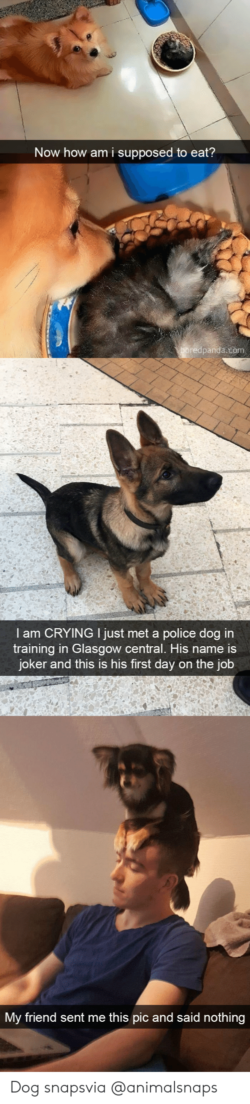 Crying, Joker, and Police: Now how am i supposed to eat?  boredpanda.com   I am CRYING I just met a police dog i  training in Glasgow central. His name is  joker and this is his first day on the job   My friend sent me this pic and said  IC  nothing Dog snapsvia @animalsnaps​