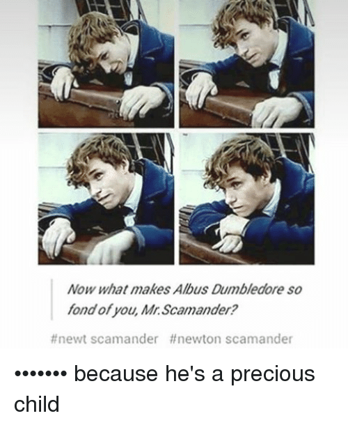 Dumbledore, Memes, and 🤖: Now what makes Albus Dumbledore so  fond of you, Mr. Scamander?  #newt scamander ff newton scamander ••••••• because he's a precious child
